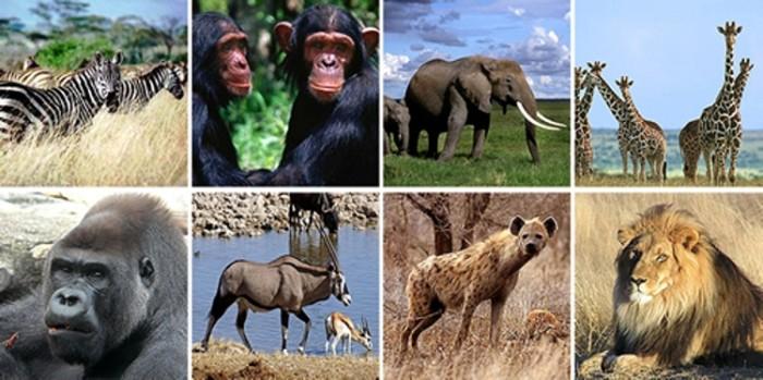 Tem Na Web - Costa do Marfim, paraíso selvagem do continente africano!
