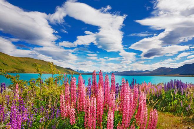 O que fazer na Nova Zelândia 5