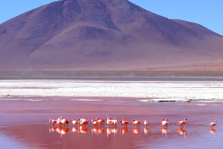 As principais lagunas dos Altiplanos Bolivianos 2