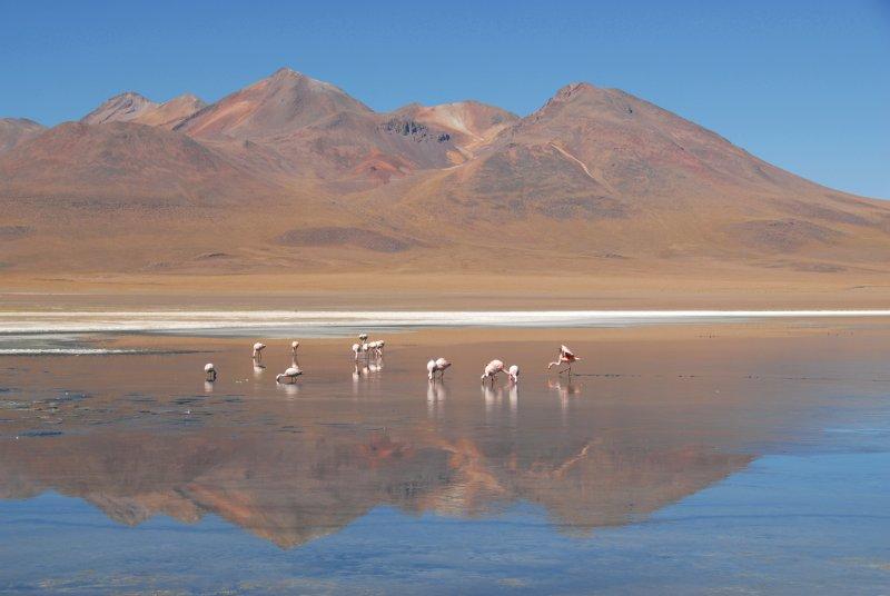 As principais lagunas dos Altiplanos Bolivianos 5