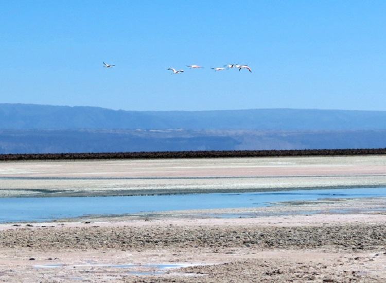 Lagunas Altiplânicas de São Pedro de Atacama 2