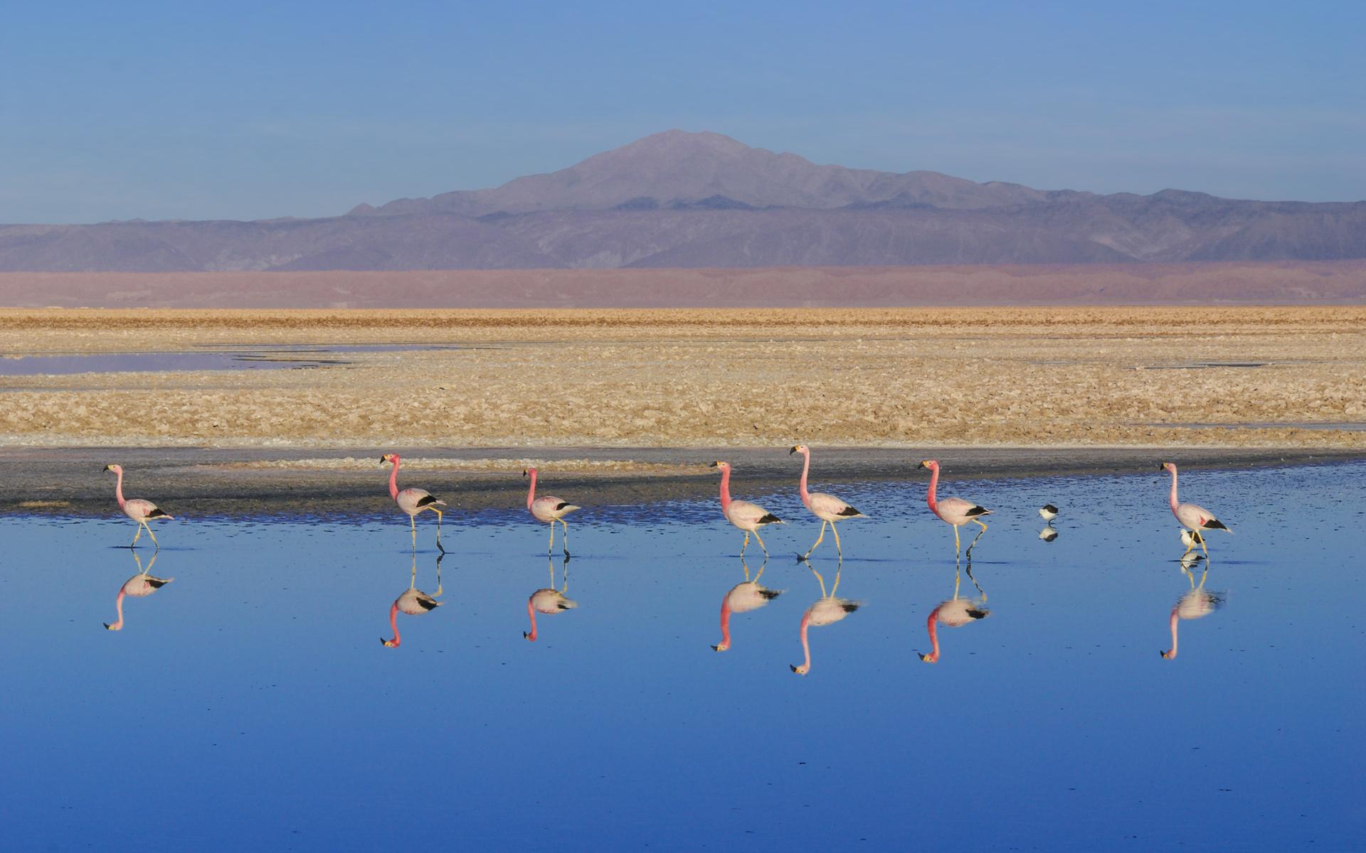 Lagunas Altiplânicas de São Pedro de Atacama 3